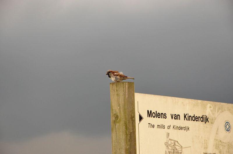 Kinderdijk_bird