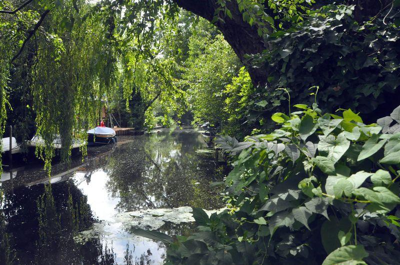 Backyard_river_view
