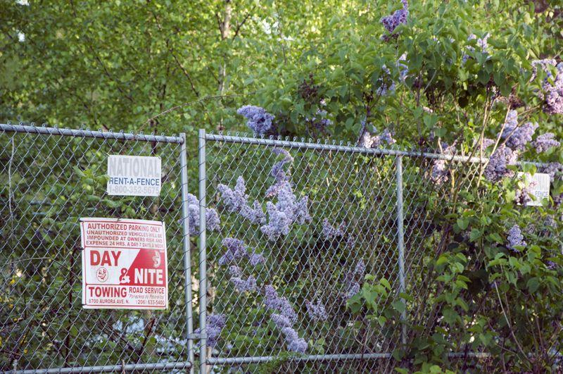 Purple_flowers_fence