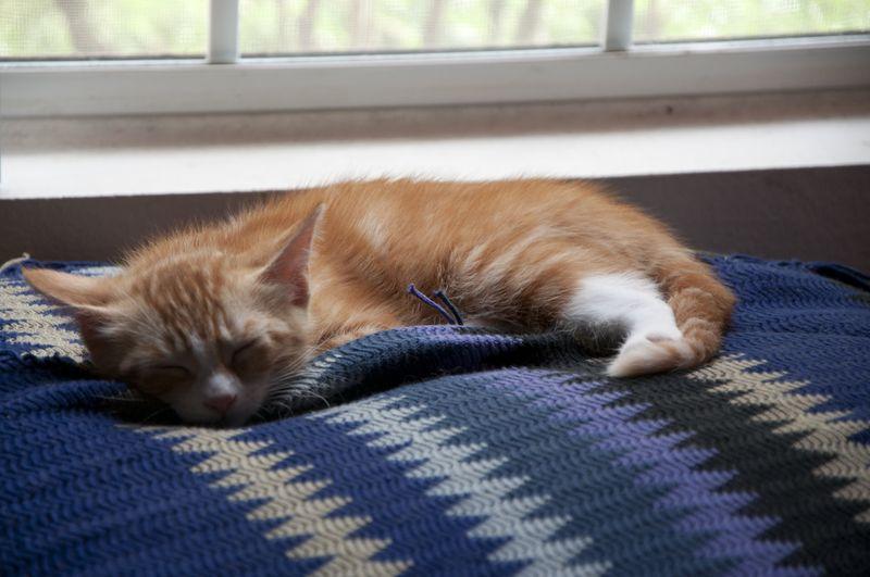 Sleepy_jolene