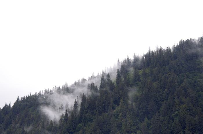 Fog_and_trees