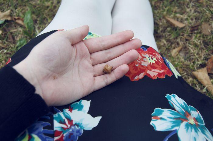 Baby_acorn